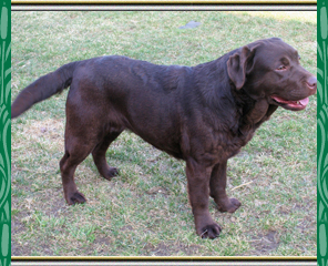 Dry Run Labrador Retrievers and Golden Retrievers